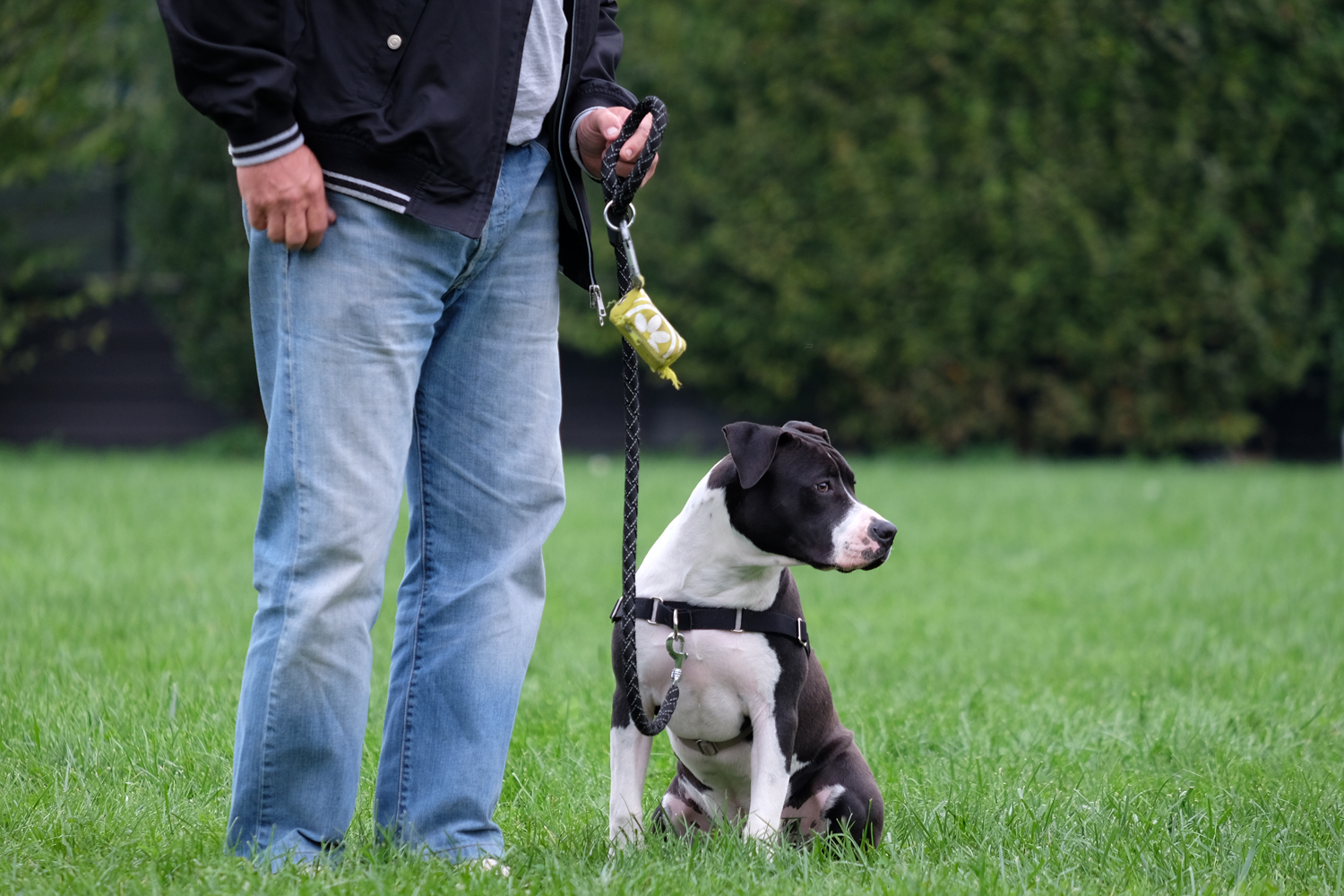ABC Dog Team corsi per cani adulti