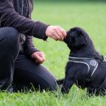 ABC-Dog-corso-per-cuccioli-3