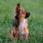 ABC-Dog-corso-per-cuccioli-4