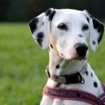 ABC-Dog-corso-per-cuccioli-5