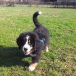 ABC-Dog-corso-per-cuccioli-6