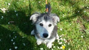 ABC-Dog-corso-per-cuccioli-7