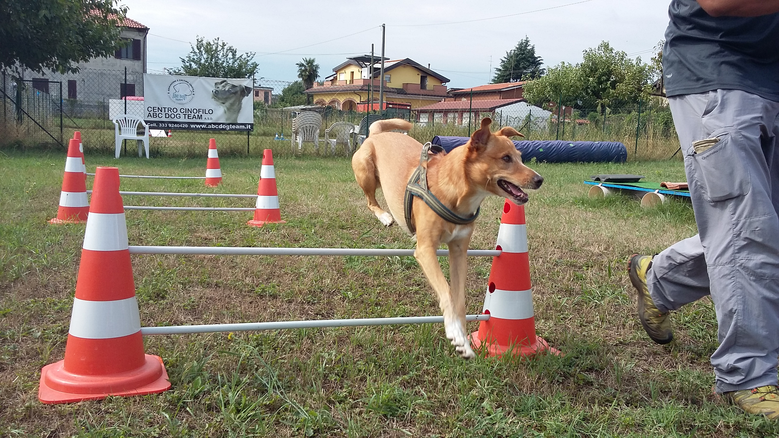 ABC Dog Monza Mobility Dog