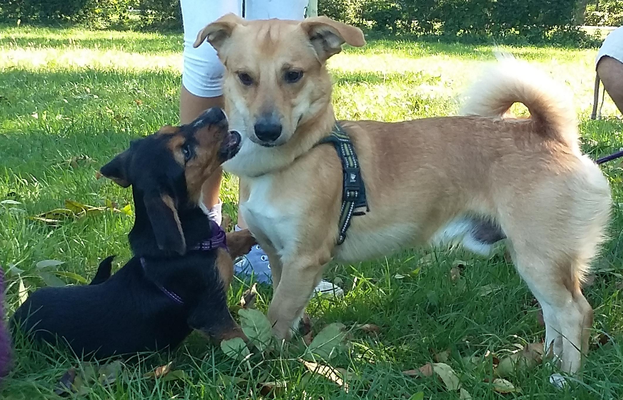 ABC Dog Team Monza Corsi di socializzazione