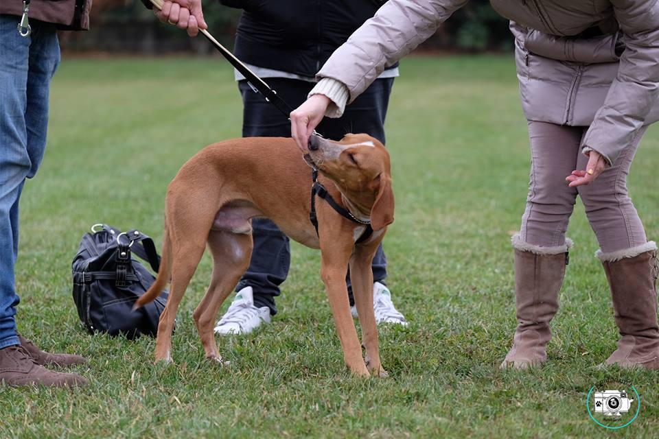 ABC Dog Team Monza Dog Gym 3