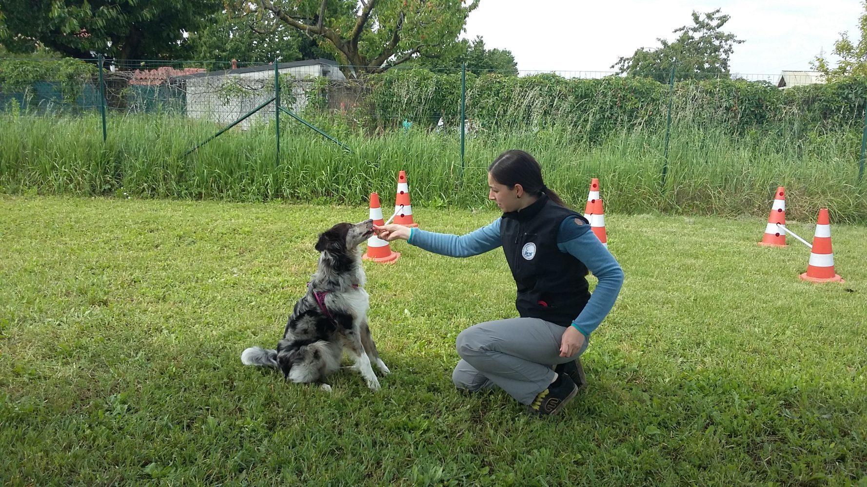 ABC Dog Team Monza Dog Gym