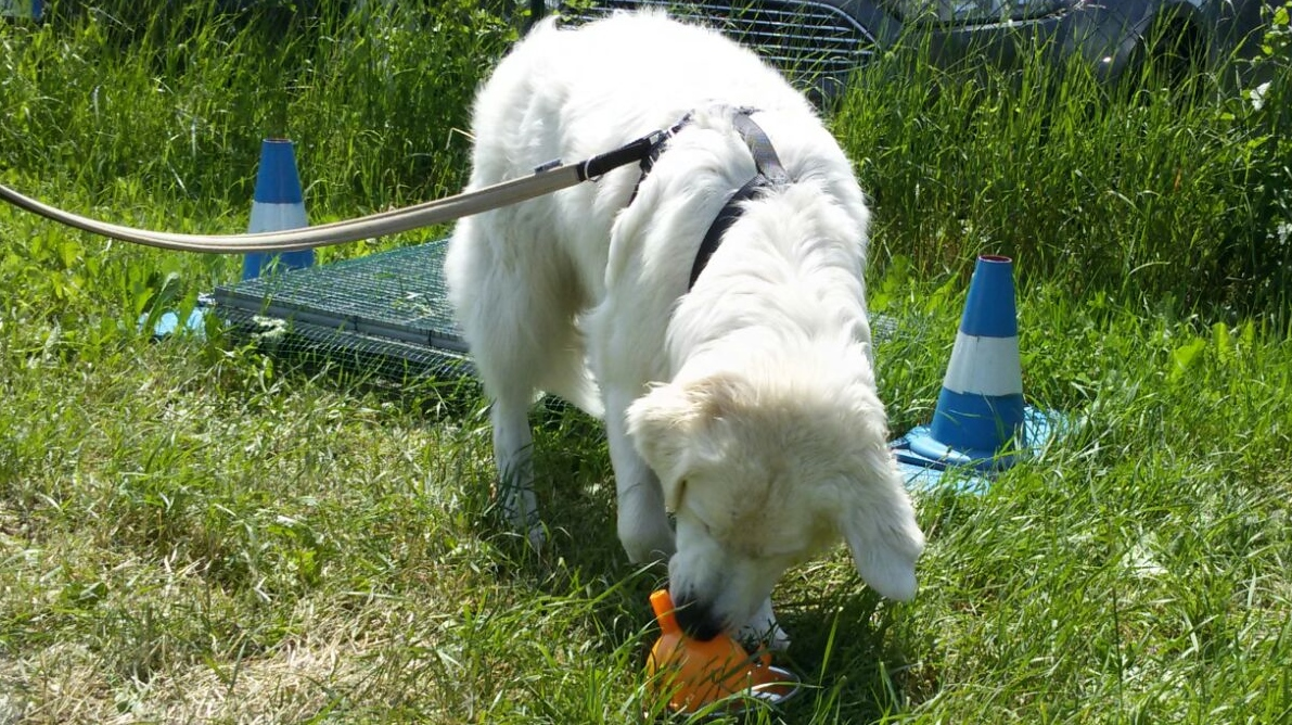 ABC Dog Team Monza Problem solving cani 6