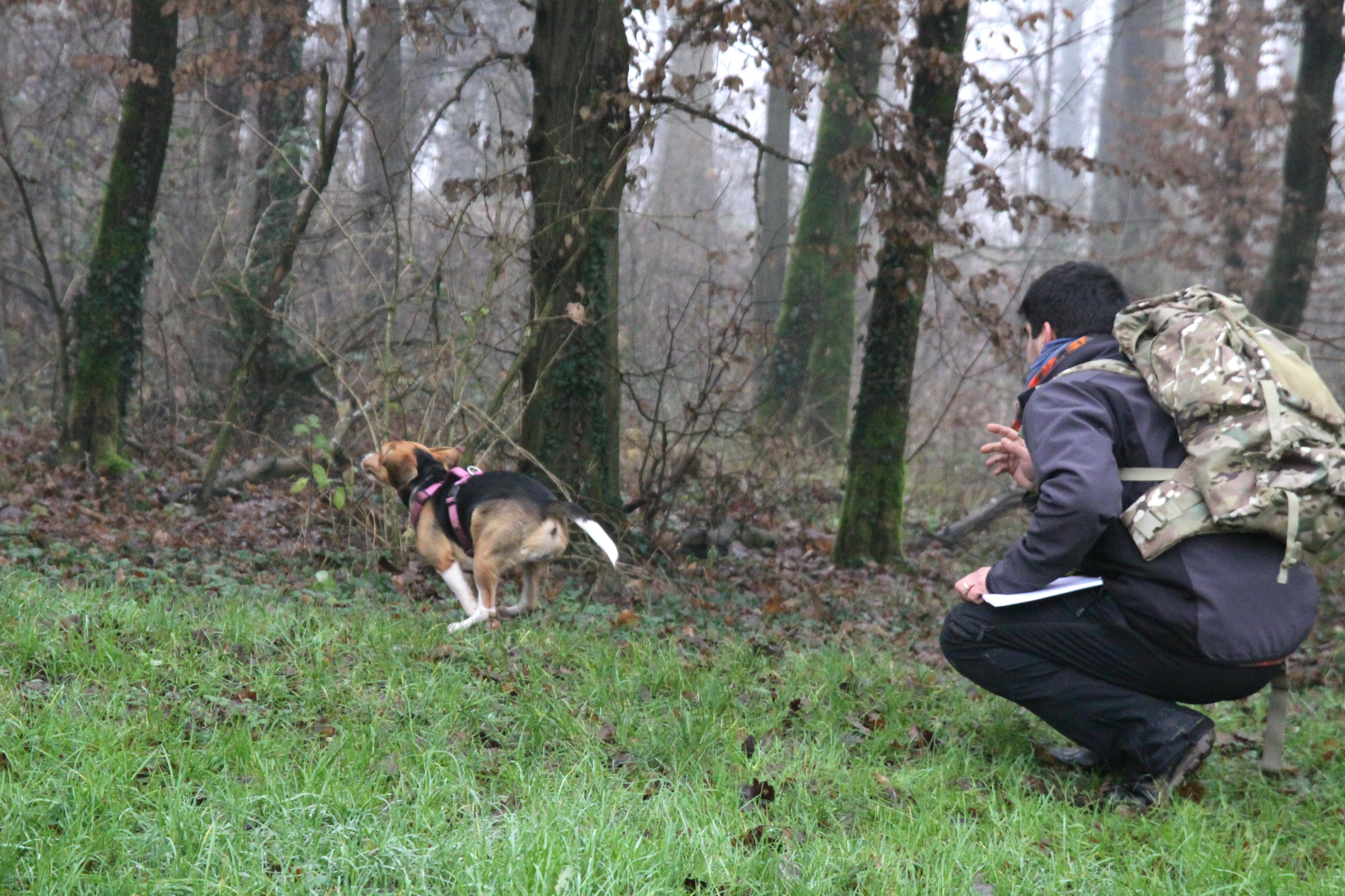 ABC Dog Team Monza Ricerca olfattiva 10