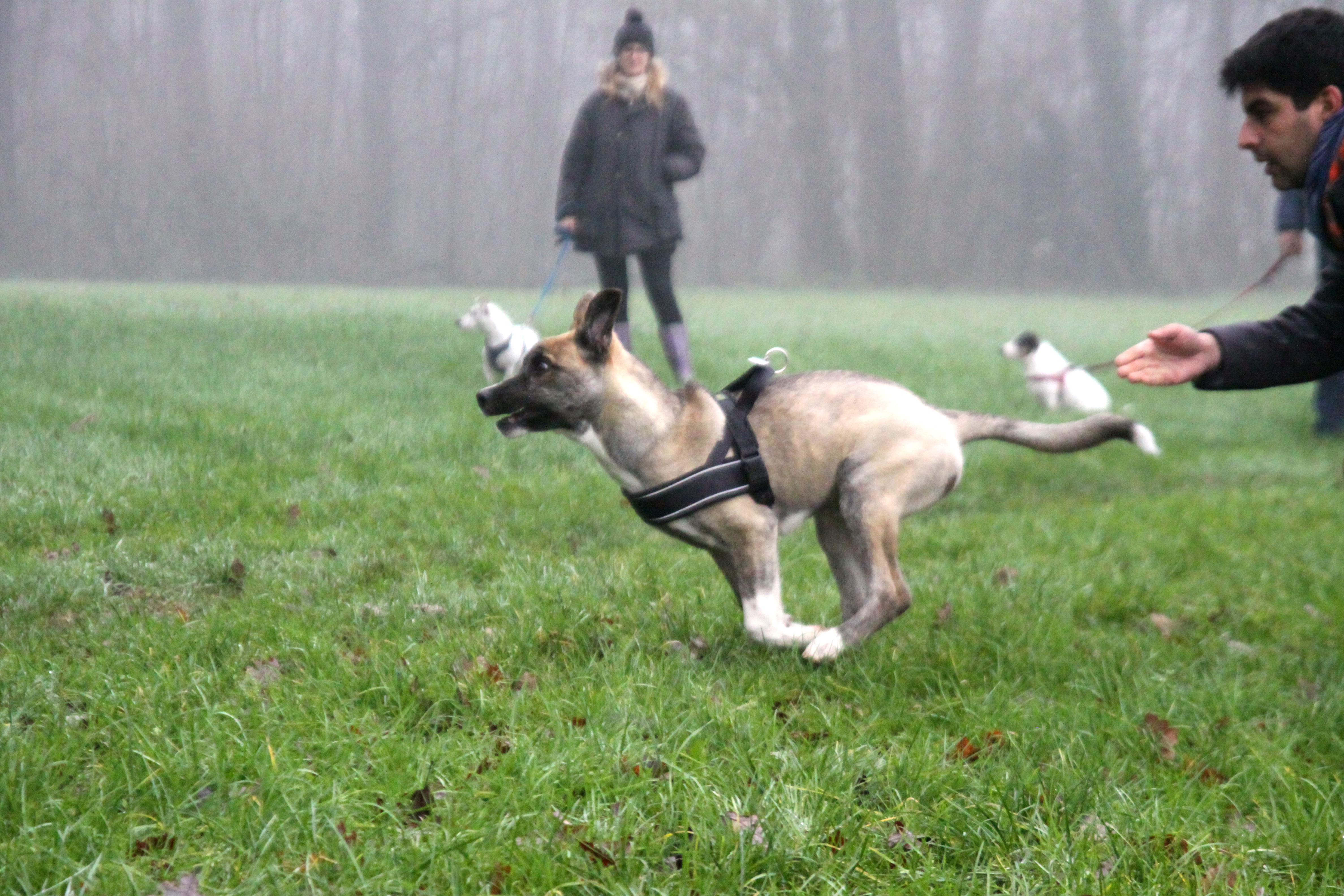 ABC Dog Team Monza Ricerca olfattiva 11