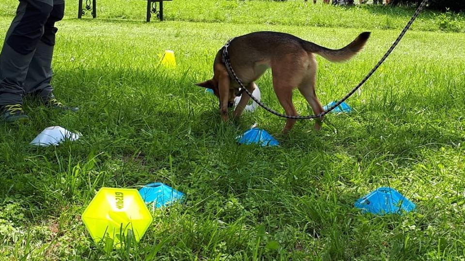 ABC Dog Team Monza Ricerca olfattiva 2