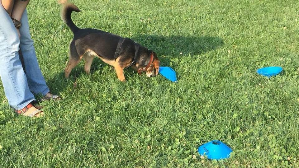 ABC Dog Team Monza Ricerca olfattiva 3