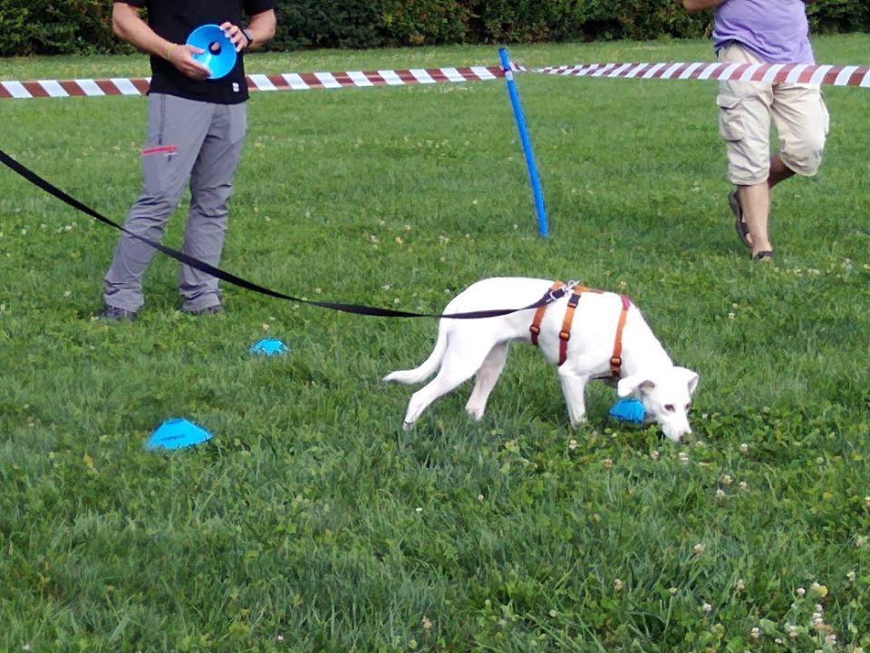 ABC Dog Team Monza Ricerca olfattiva 4