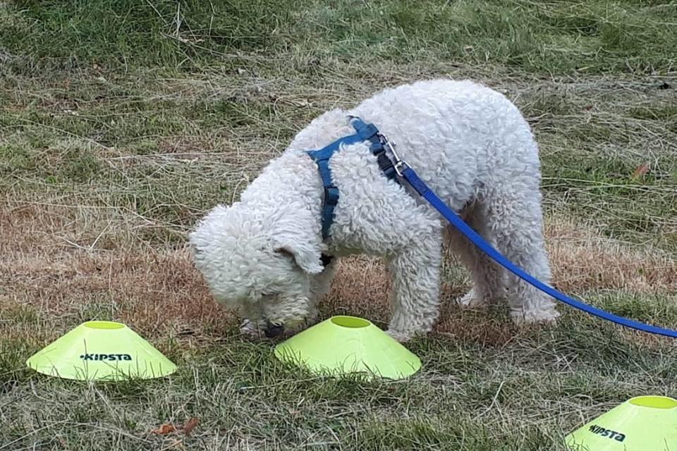 ABC Dog Team Monza Ricerca olfattiva 5
