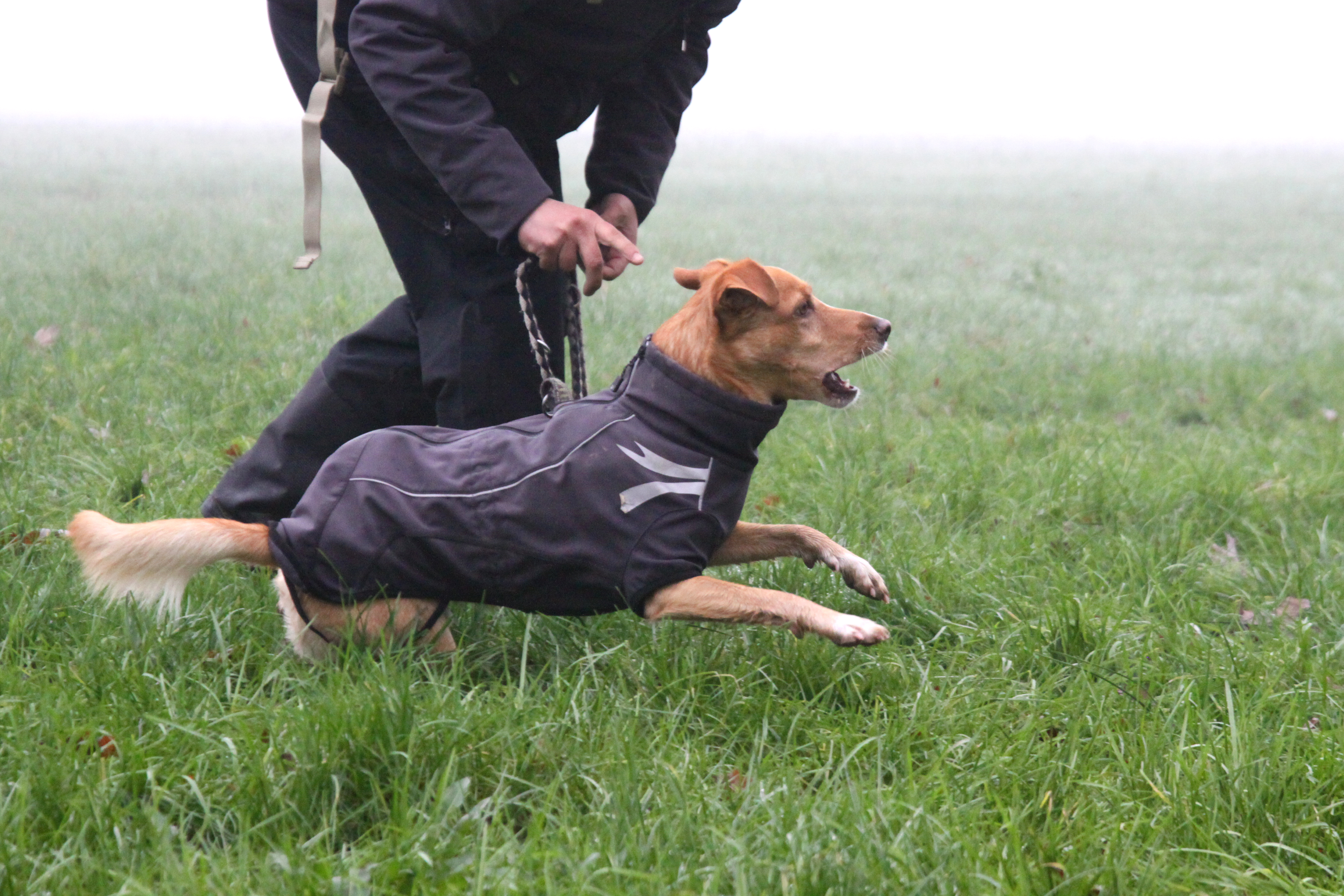 ABC Dog Team Monza Ricerca olfattiva 9