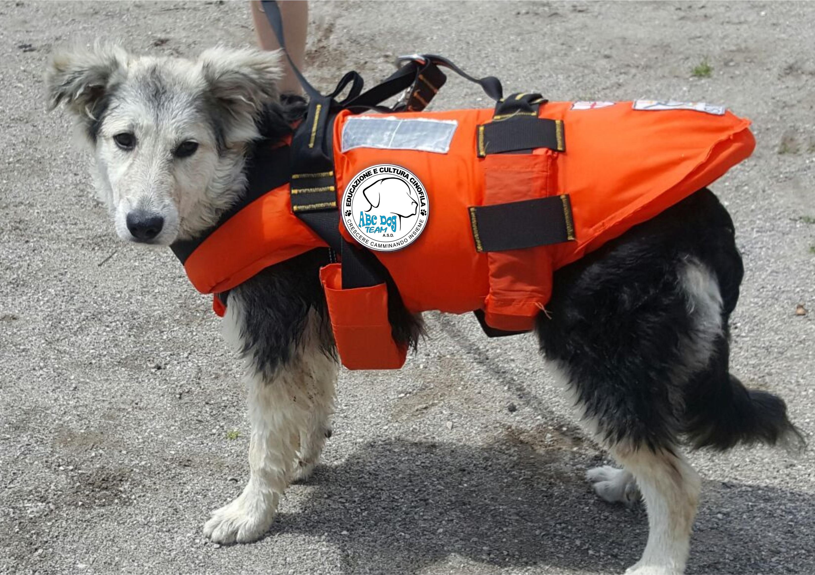 ABC Dog Team Monza acquaticità cani 10