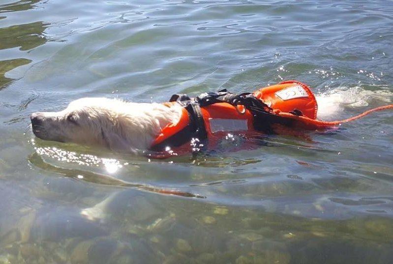 ABC Dog Team Monza acquaticità cani 2