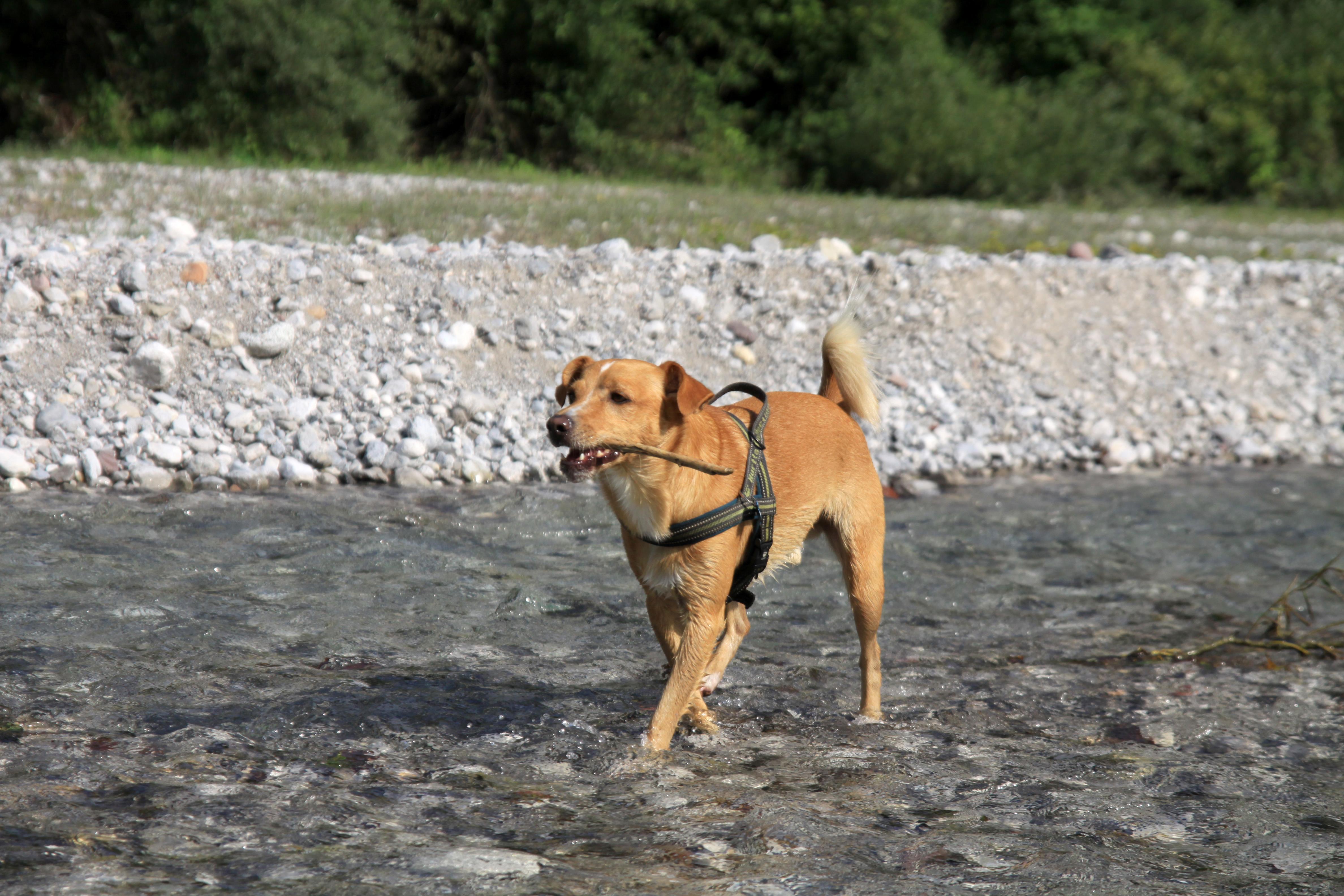 ABC Dog Team Monza acquaticità cani 3
