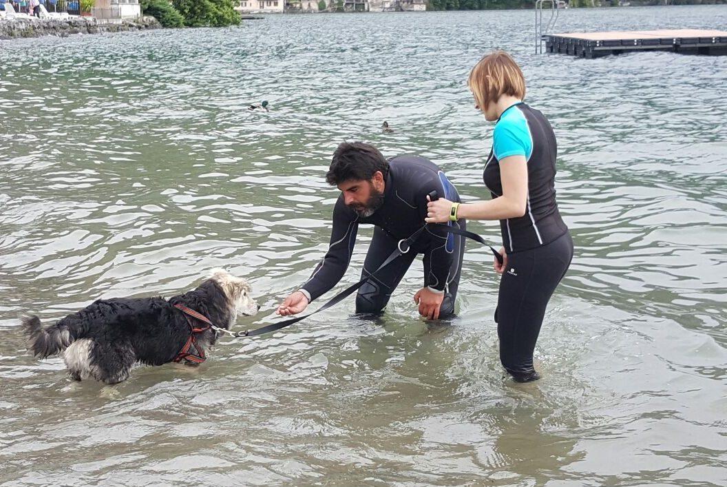 ABC Dog Team Monza acquaticità cani 6