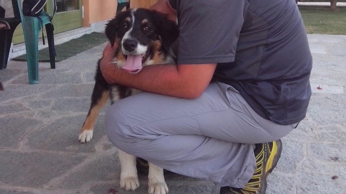 ABC Dog Team Monza consulenza pre-adozione