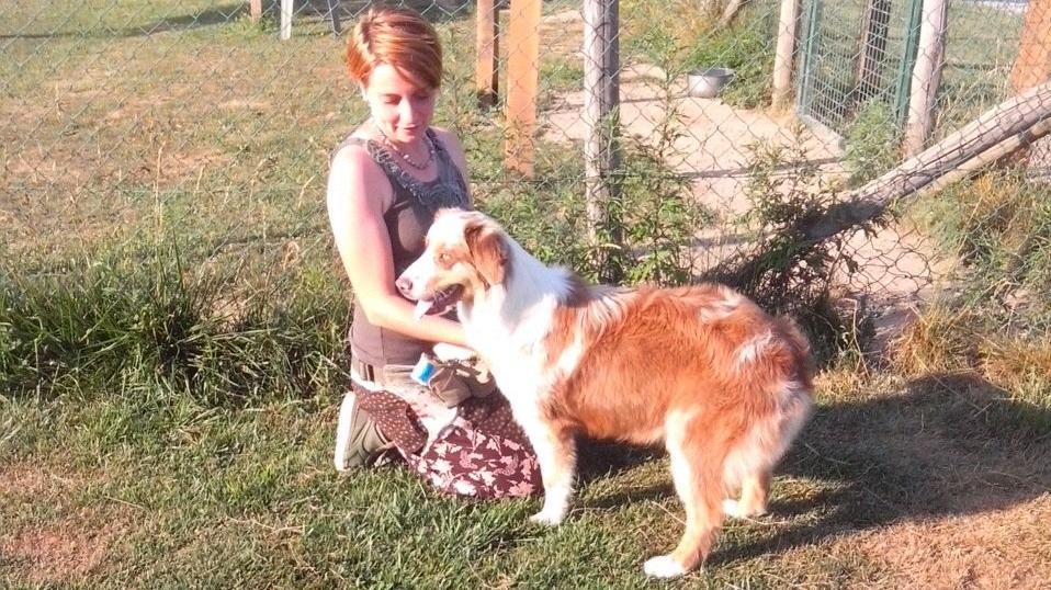 ABC Dog consulenza pre-adozione