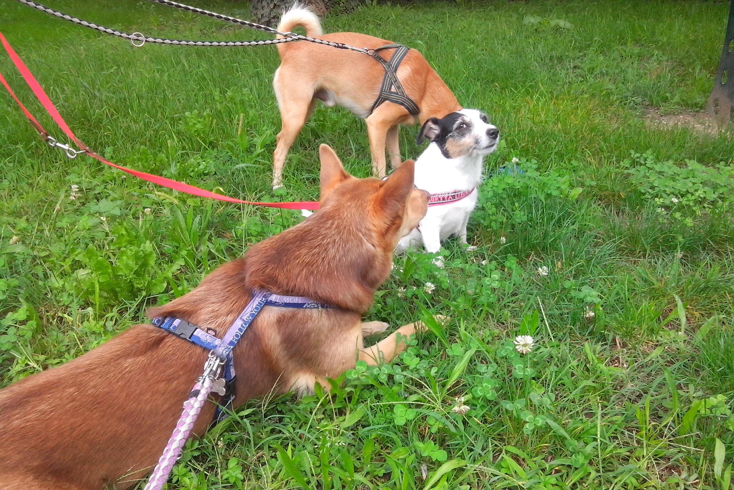 ABC Dog corsi socializzazione cani