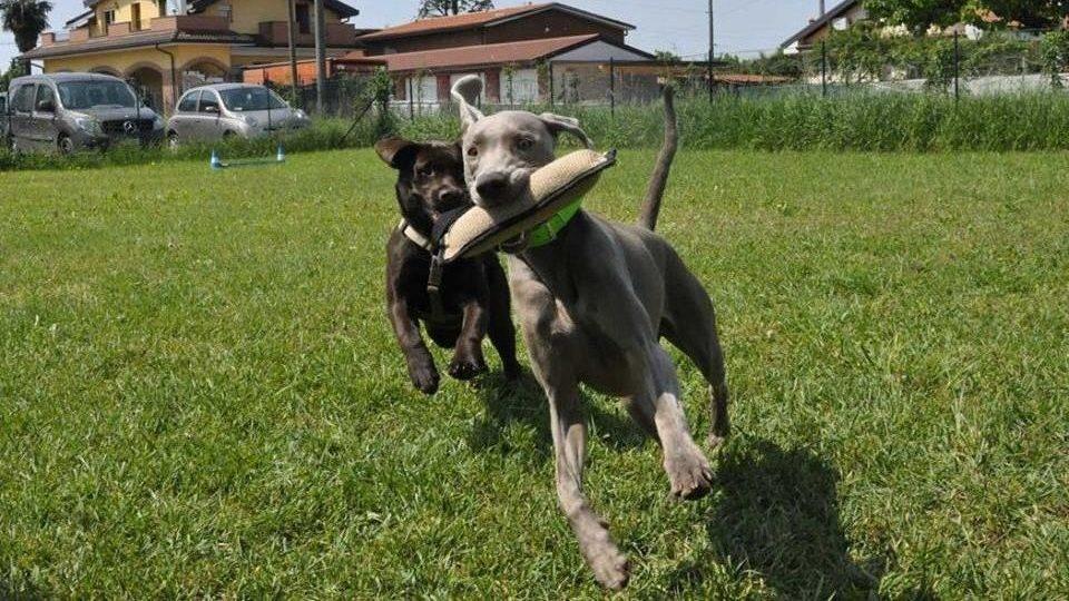 ABC Dog corsi socializzazione