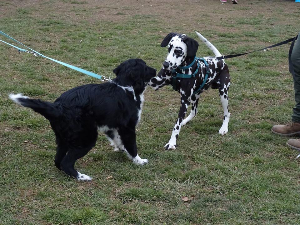 ABC Dog socializzazione tra cani