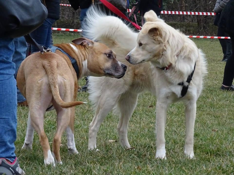 ABC Dog socializzazione