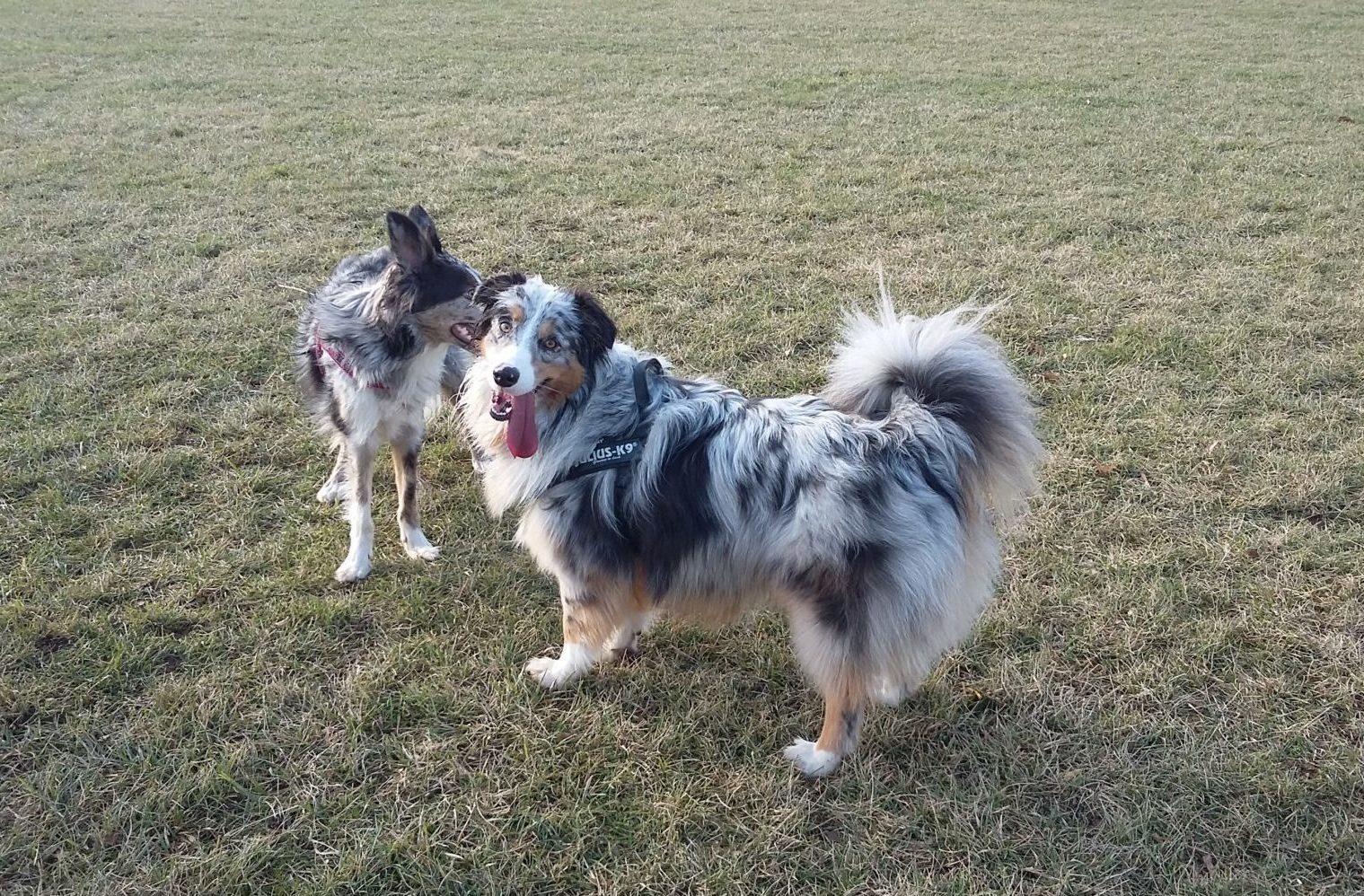 ABC Dog team corsi socializzazione