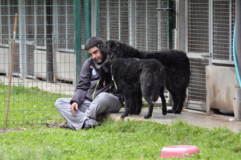 Consulenza pre-adozione cani