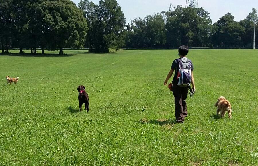 Corsi di socializzazione tra cani