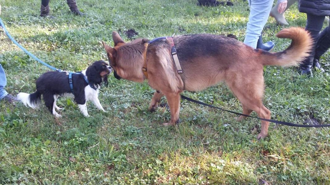 Corsi socializzazione ABC Dog