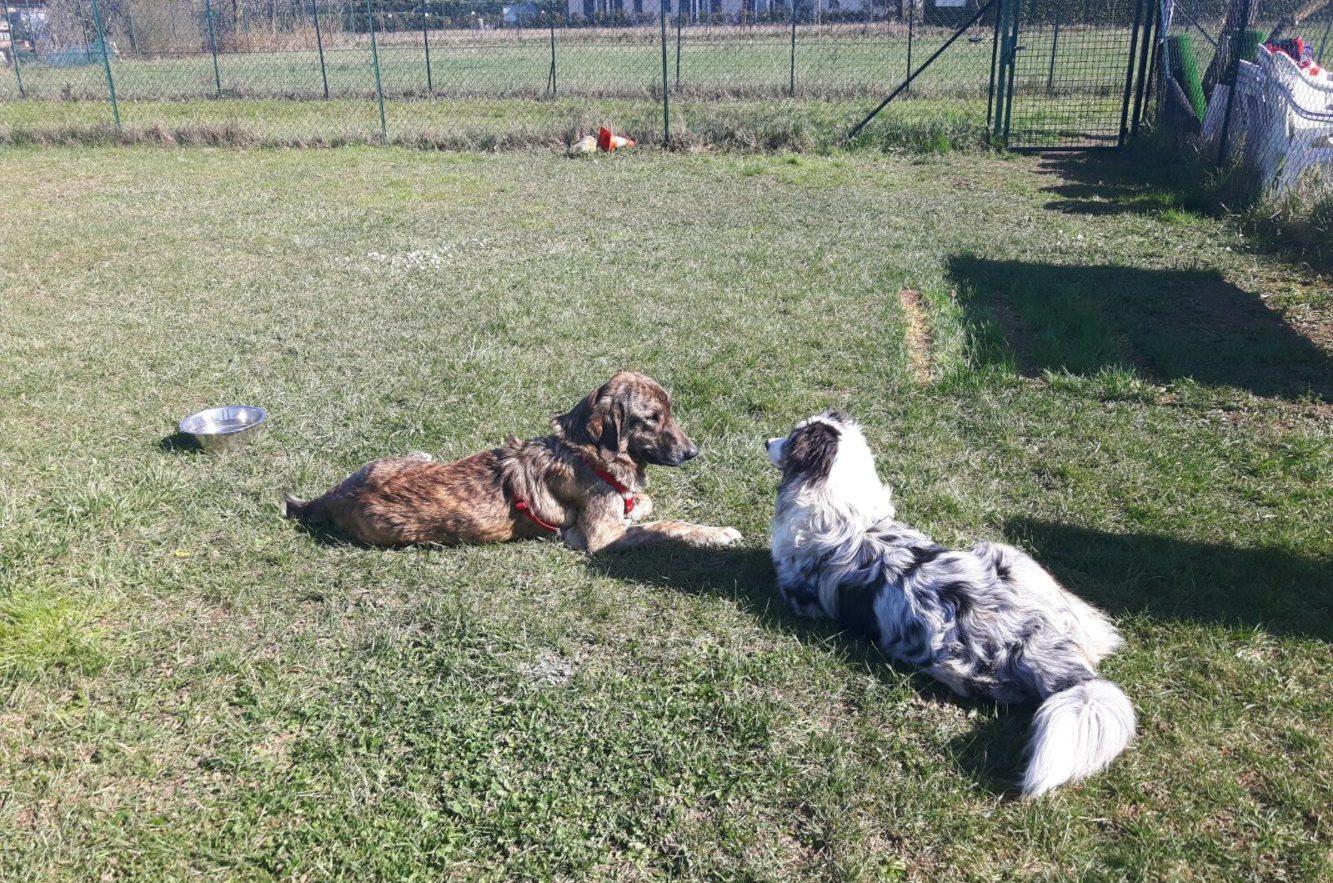 Corso di socializzazione ABC Dog Team Monza