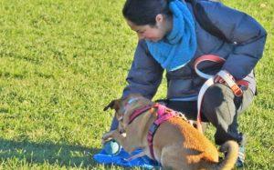 ABC DOG TEAM MONZA problem solving
