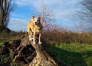 Abc Dog Team Mobility Dog in natura Monza