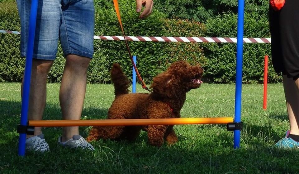 Mobility Dog ABC Dog Monza