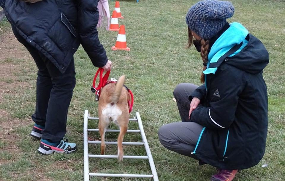 Mobility Dog ABC Dog Team Monza