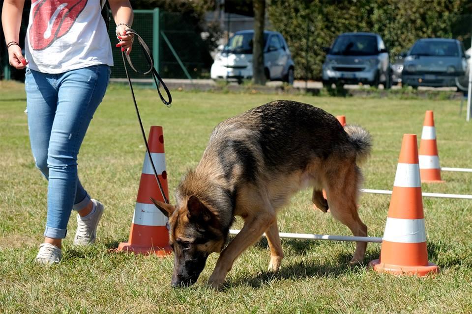 Mobility Dog ABC Dog