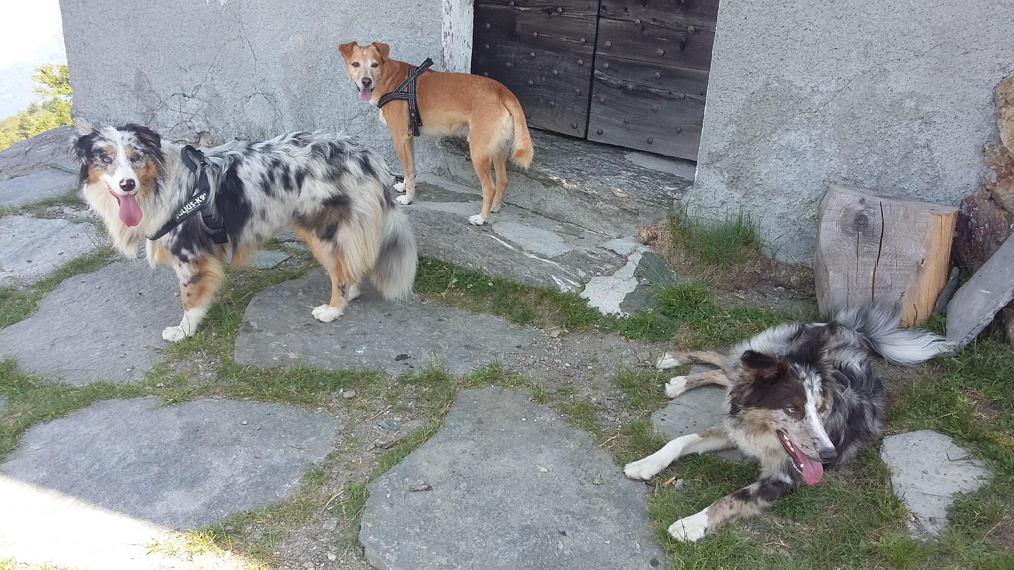 Montagnavventura con cani ABC Dog