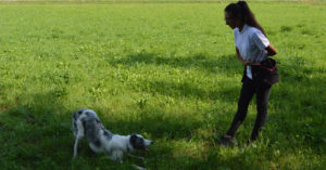 Abc dog team tricks di dog dance