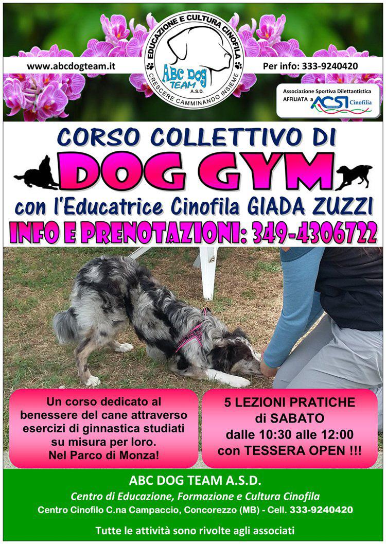 ABC DOG dog gym 2017