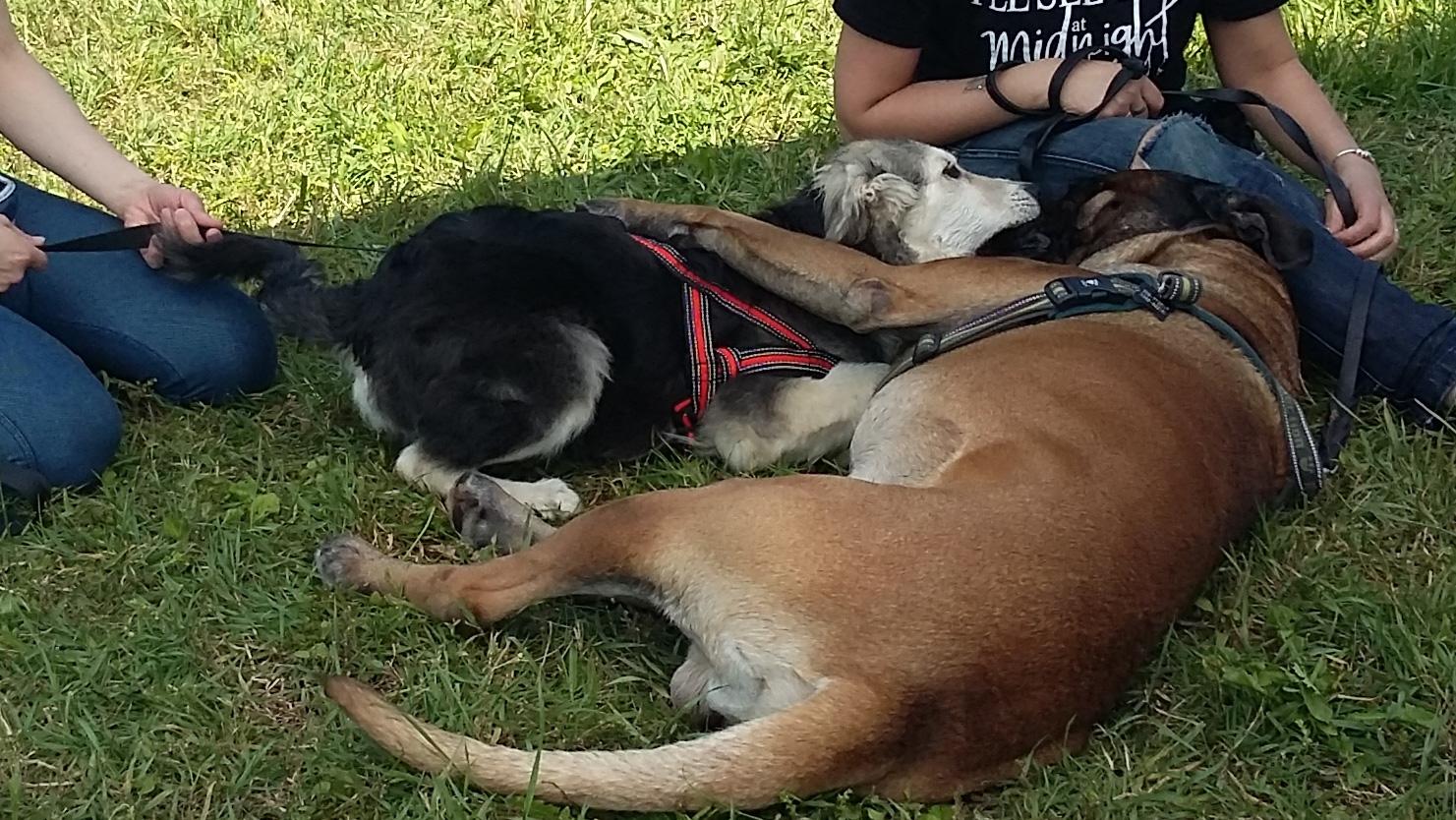 ABC Dog Corsi di rieducazione