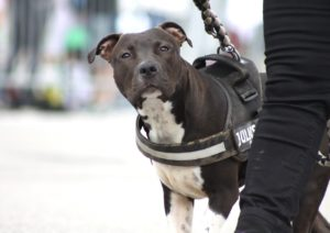 ABC Dog Team Monza corsi di formazione 14
