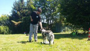 ABC Dog corsi cinofili