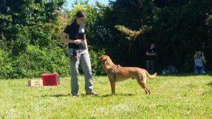 ABC Dog formazione cinofila
