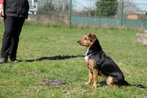 ABC Dog team Monza corsi 2