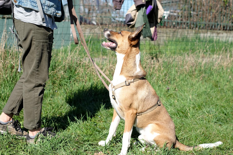 ABC Dog team monza corsi cinofilia
