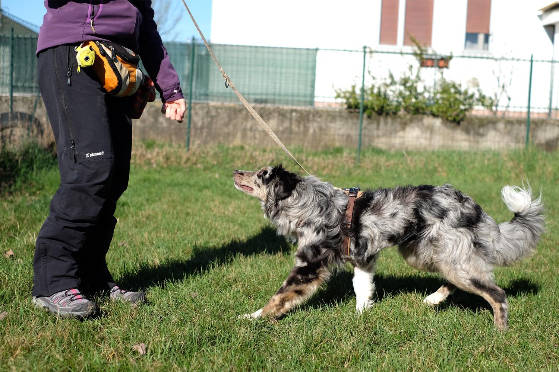 ABC Dog team monza corsi di formazione