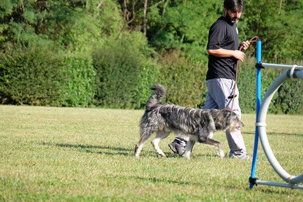 Corsi di rieducazione cani