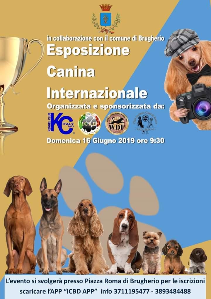 Esposizione canina internazionale 2019 Brugherio_ABC DOG Team